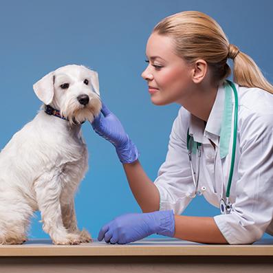 Animal Care Course