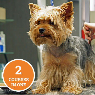Dog Grooming Level 3 and 4 Bundle