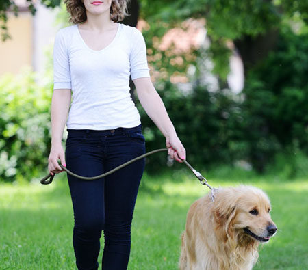 Pet Sitting and Dog Walking Course