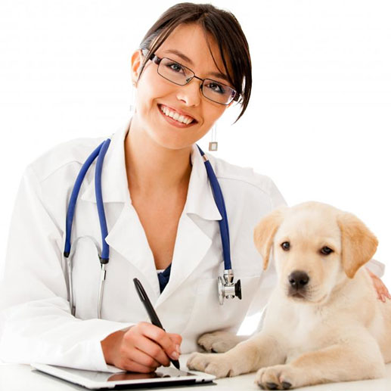 Veterinary Nursing - Level 3 Course